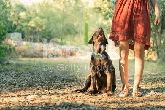stock-photo-95310549-pet-dog-in-sunlight-near-unrecognizable-girl-in-dress (1)